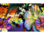 Fototapeta Colorful butterflies